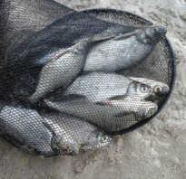 Ловля рыбы на покаток РЫБАЛКА