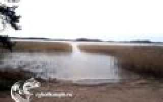 Озера для рыбалки в Ленинградской области