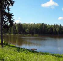 Платная рыбалка в Зубово Волоколамский район