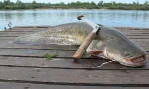 Что это такое? Фото, видео рыбалки с лодки, выбираем эхолот, приманку и электронный квок