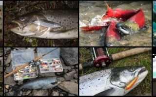 Ловля семги – особенности рыбалки – РЫБАЛКА