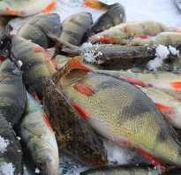 Рыбалка в Тюменской области бесплатно