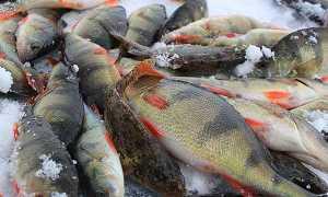 Рыбалка в Тамбовской области. Добавить рыболовное место на карту.