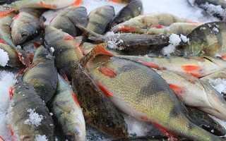 Рыбалка в Архангельской области. Карта рыболовных мест…