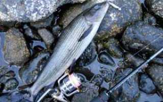 Снасти для ловли хариуса летом: как сделать оснастку своими руками для рыбалки в сибири на енисее