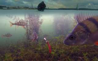 Рейтинг подводных камер для зимней рыбалки