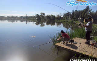 Три Пескаря — платная рыбалка в Лыткино без нормы вылова