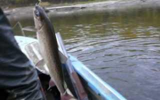 Ловля ленка — читайте на Сatcher.fish