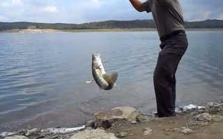 Ловля судака на донку — монтаж оснастки и тактика рыбалки