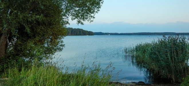 Прогноз клёва рыбы в деревне Михалево
