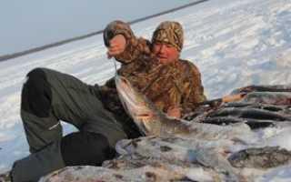 Рыбалка в Нижневартовске: лучшие места. Реки и озера Нижневартовска