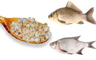 Как правильно варить перловку для рыбалки, сколько приготовить для ловли рыбы