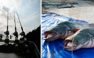 Ловля сома троллингом — Здесь рыба
