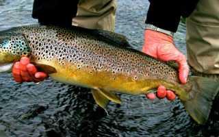 Ловля форели весной — приемы, тактика поимки этой рыбы