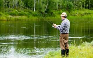 Ловля карася на фидер в июле Речная рыбалка на фидер летом
