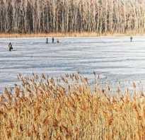При каком давлении лучше клюет рыба: оптимальное атмосферное давление для нормального клева, благоприятные условия для ловли рыбы летом, какое лучше для рыбалки