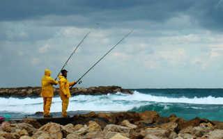 При каком ветре не клюет рыба и при каком его направлении клюет лучше?