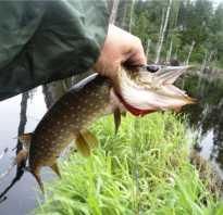 Лучшие места для рыбалки, сезоны рыбалки