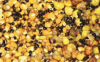 Как варить кукурузу для рыбалки на сазана