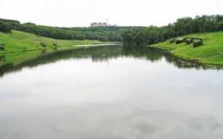 Платная рыбалка в Одинцово и районе на зарыбленных прудах