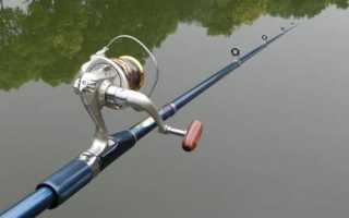 Как и какую удочку выбрать для ловли карпа начинающим рыбакам
