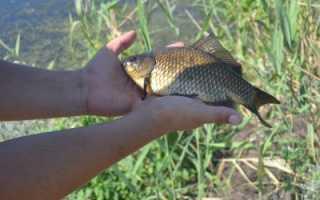 Ловля карася — особенности рыбалки