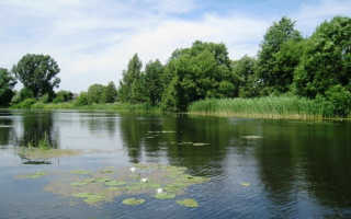 Рыбная ловля в Брестской области