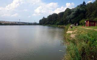 РХ Сенеж — платная рыбалка в Солнечногорском районе Подмосковья