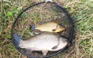 ЛОВЛЯ КАРАСЯ НА ФИДЕР ловля Карась на фидер осенью Рыбалка