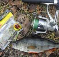 Микроджиг на окуня — оснастка и приманки для ловли весной и летом