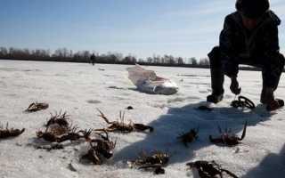 Ловля раков зимой на раколовку