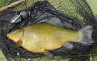 Линь, фидер, прикормка — Самоделки для рыбалки своими руками