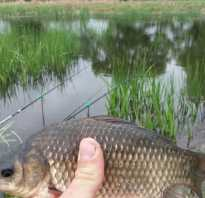 Рыбалка на старице на карася