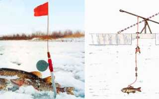 Ловля щуки на флажки. Рыбалка на зимние жерлицы