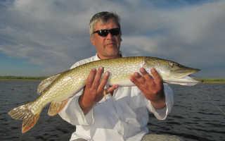 Рыбалка в соленое займище астраханской области