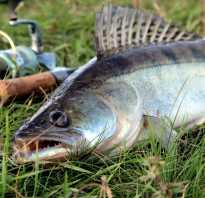 Рыбалка на Псковском озере в Псковской области