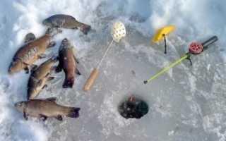 Ловля линя в зимнее время года