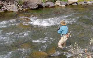 Снасти для ловли голавля летом