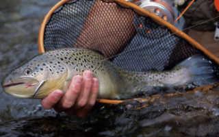 Ловля форели на платных водоемах