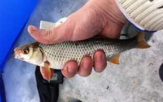 Ловля чебака на удочку — На рыбалке!