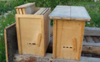 Ловушки для пчел своими руками как заманить пчел в ловушку