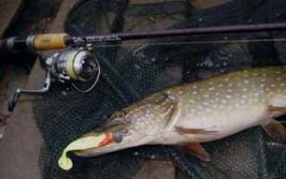 Ловля щуки на спиннинг и как поймать трофейную рыбу