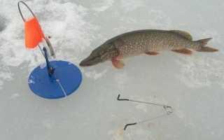 Установка жерлицы на щуку зимой схема — Здесь рыба
