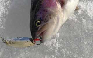 Форель зимой: ловля со льда, мормышки, блёсны, балансиры