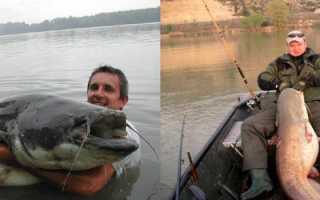 Ловля сома летом — читайте на Сatcher.fish