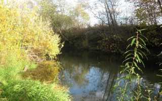 Ловля щуки спиннингом на малых лесных реках