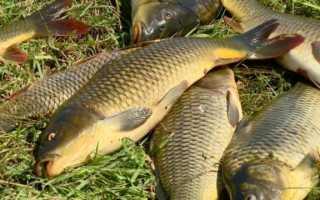 Ловля рыбы на пенопластовые шарики — Здесь рыба