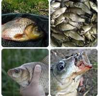 Хитрости летней рыбалки на карасей