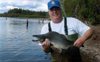Ловля горбуши — особенности рыбалки