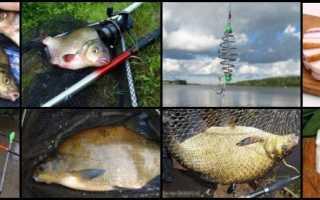 Ловля леща на сало с чесноком: какая еще рыба клюет, кроме карася